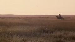 草原啊草原 我的家乡