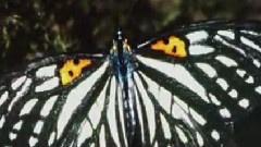 当蝴蝶飞过