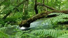 自然之声 雨林深处 班得瑞