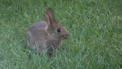 我们的小可爱 野生兔子
