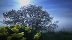 神奇的大自然:花开的如此美丽