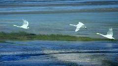 天水一色青海湖
