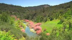大自然风光之四季之春
