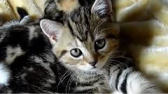 猫咪的幸福生活