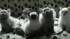 十大可爱猫咪