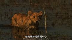 国家地理频道:最后的狮子