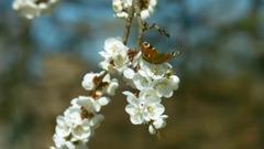 春天的鸟语花香 聆听大自然之声