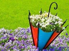 鸟语花香 森林中的蓝铃花