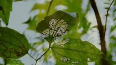 爱的风雨路•野罂粟