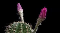 Highland(花朵盛开)