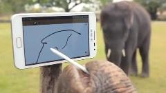彼得象玩大屏手机
