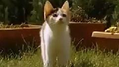 猫咪慢动作唯美跳跃