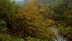大自然风光之丛林深处