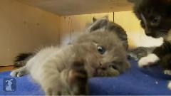 Kitty Takes A Long Stretch