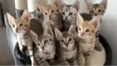 猫咪颈部运动2