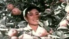 摘苹果的姑娘